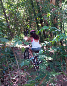 bamboo forest cycling